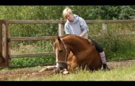 How To Horse Train|    Lay Down your Horse without Ropes