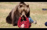 How To| Survive a Bear Attack